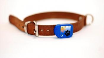 SmartDog, okos nyakörv, kisállat monitorozása, Meteo Klinika,